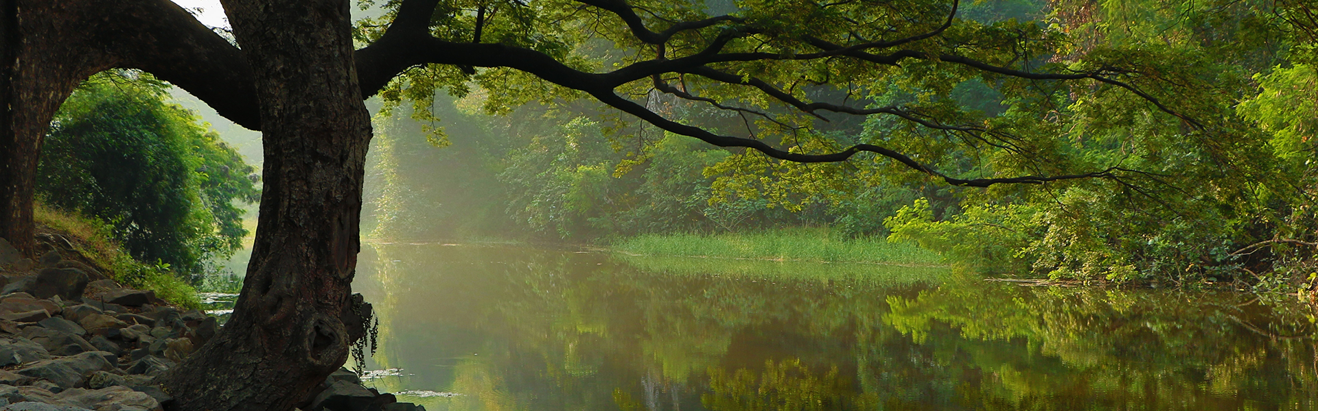 Large Tree standing over calm waters